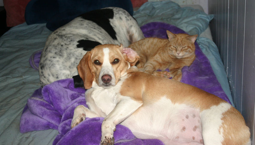 lucy with coonhound and cat