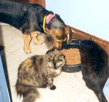 elly may basset hound with cat