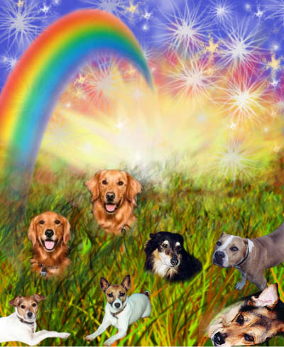 pets cross the rainbow bridge