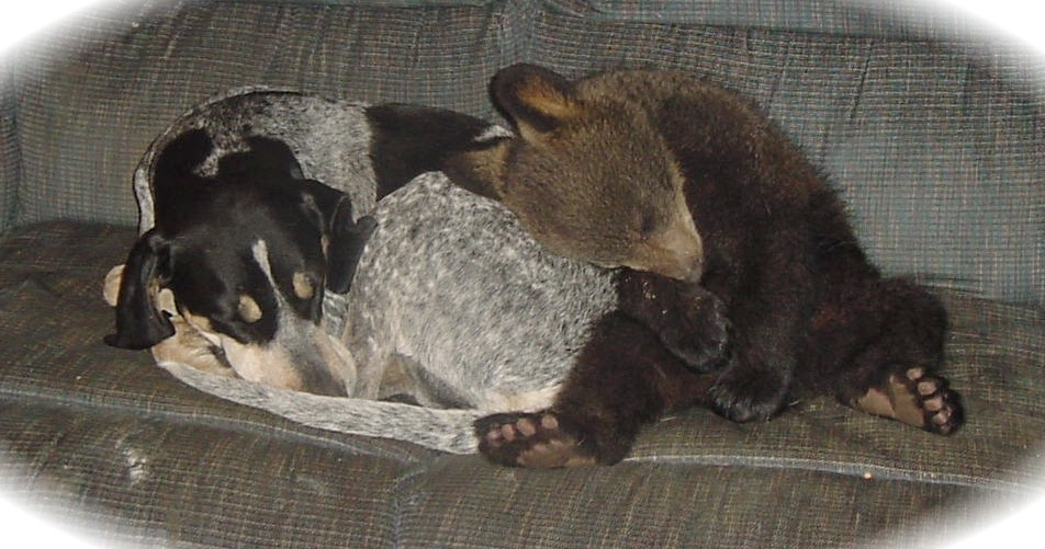 benny  the bear cub and Fannie May the blue tic hound