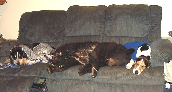 sybil the black bear taking a nap with her coonhound